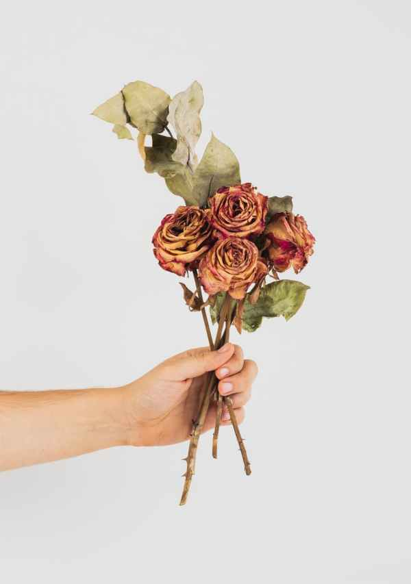 person holding dried roses